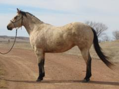 SQH Time Machine<br>AQHA 5373766