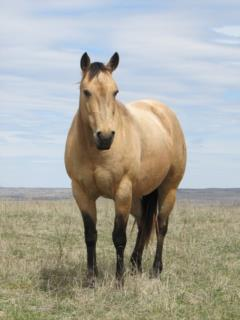 Dry Biscuit Mujer JW<br>AQHA 5394110