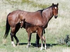 Whiskey Up Roan JW <BR>AQHA 5695693