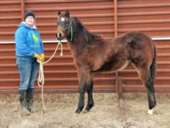 Whiskey Up Greece JW <BR>AQHA 5879329