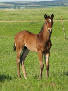 Whiskey Up Greece JW <BR>AQHA Pending