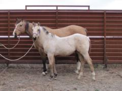 Two Tylet Honey Bee <BR> AQHA Pending