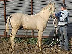 Docs Hustle Drift JW<br>AQHA X0708907