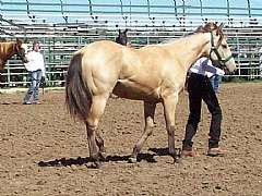 Pictured here as a Yearling