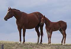 Pictured with her 2008 foal.
