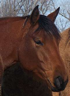 VG Docs Peppy Rose<br>AQHA 4558058