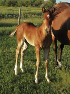 Whiskey Up Poland JW <BR> AQHA Pending