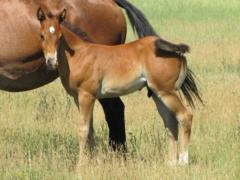 Whiskey Up Poland JW <BR> AQHA 5882387