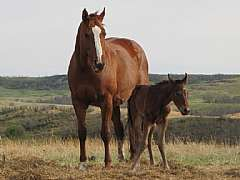 Pictured with her 2012 filly.