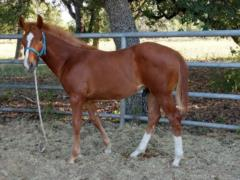 Anyware This Smart <BR> AQHA Pending
