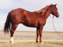 Anyware This Smart <BR> AQHA 5888273