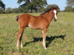 Anyware This Cat <BR> AQHA Pending