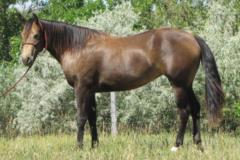 Paddys Gin Timber JW<br>AQHA 5629047