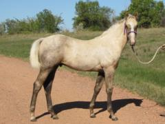 Timon Drift JW <BR>AQHA 5819950