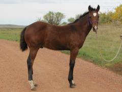 Whiskey Up Torino JW <BR>AQHA 5736561