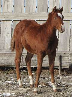 French Sugar Guy JW<br>AQHA 5299922