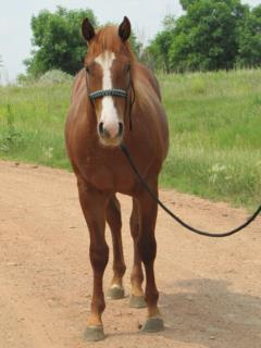 Two Step Reed JW<br>AQHA 5558806