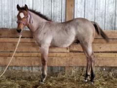 Whiskey Up Yao JW <BR> AQHA Pending