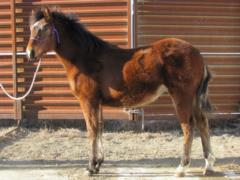 Whiskey Up Zazu JW <BR> AQHA 5819953